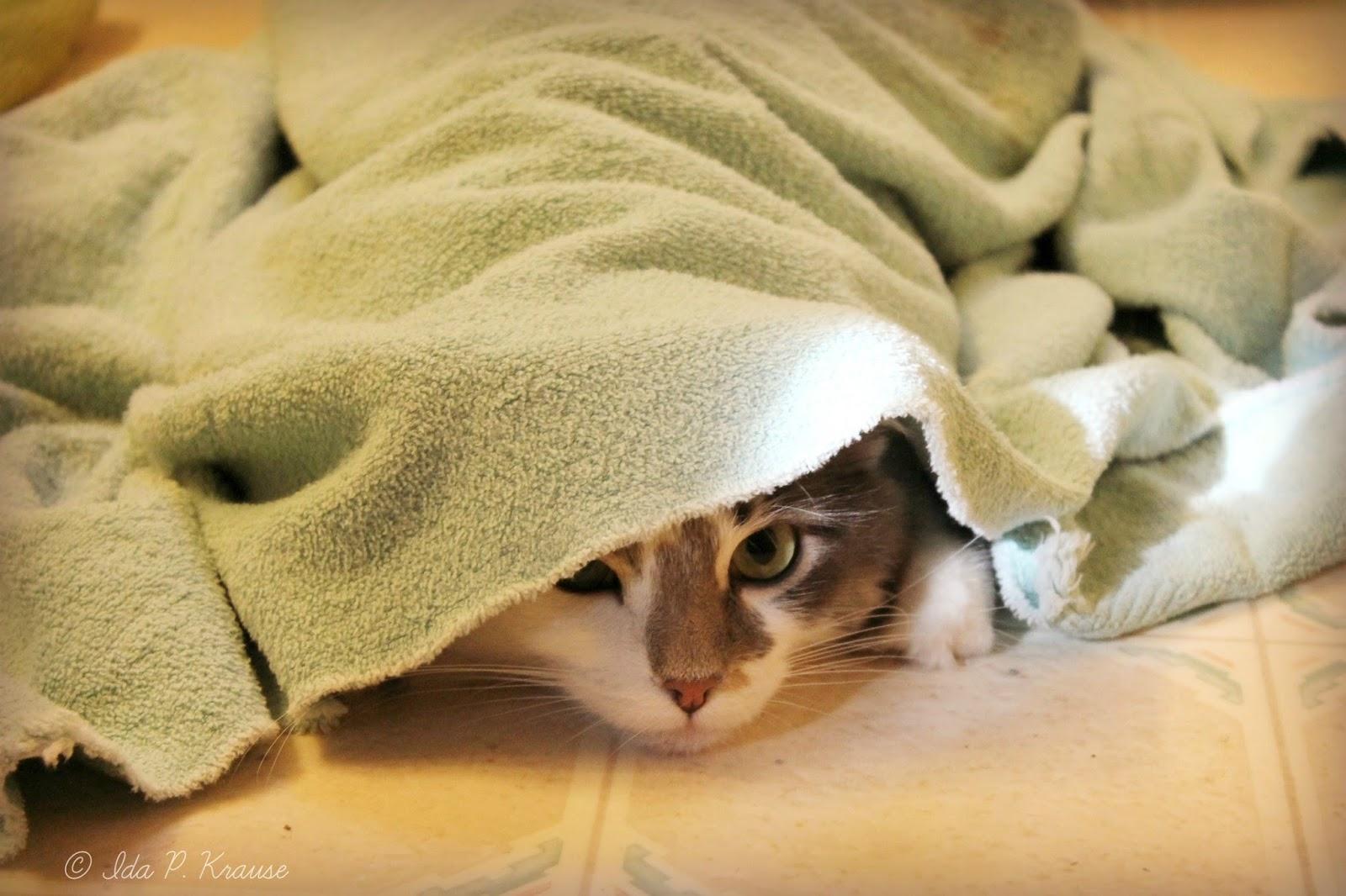 кошка род одеялом