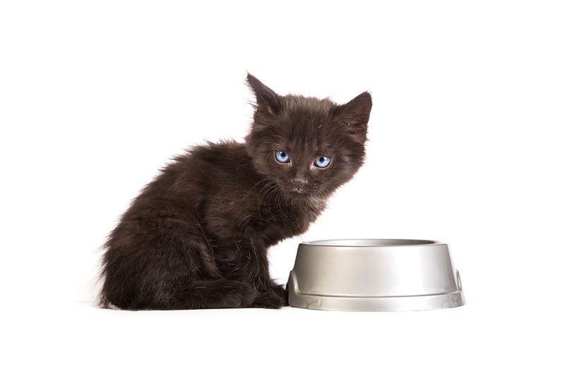 красивый котенок ест