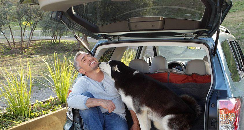 собака в багажнике