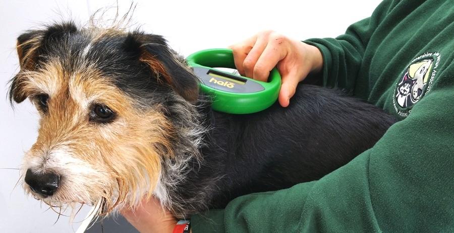 чип для собаки