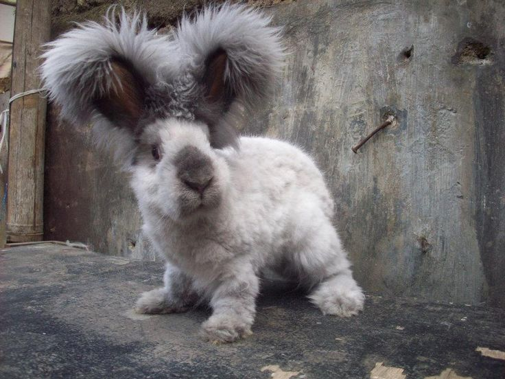 Кролик красивый и пушистый