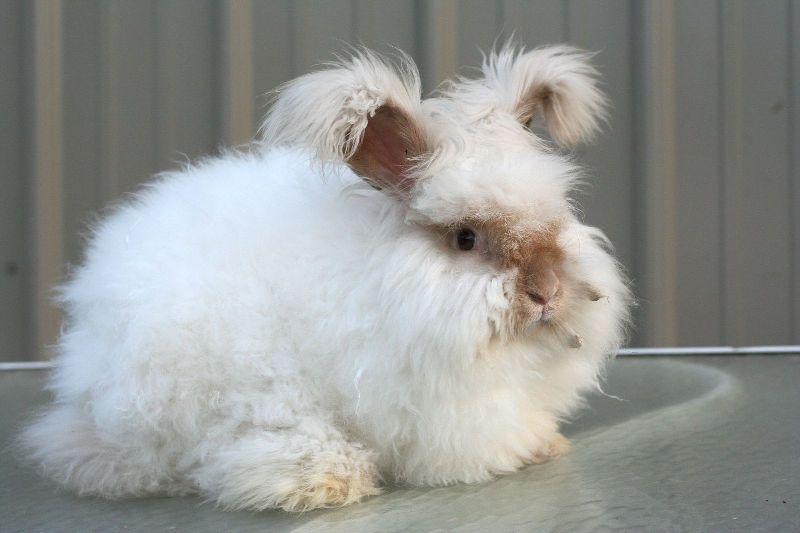 ПУшистенький кролик