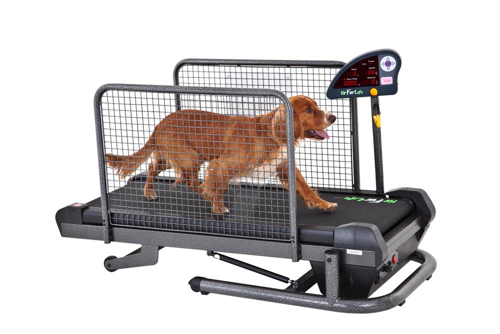 беговая дорожка для собак