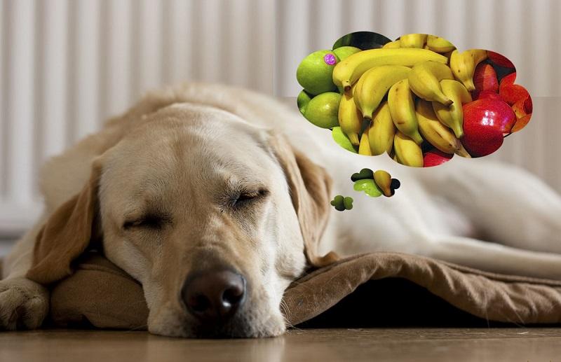 собачка и фрукты