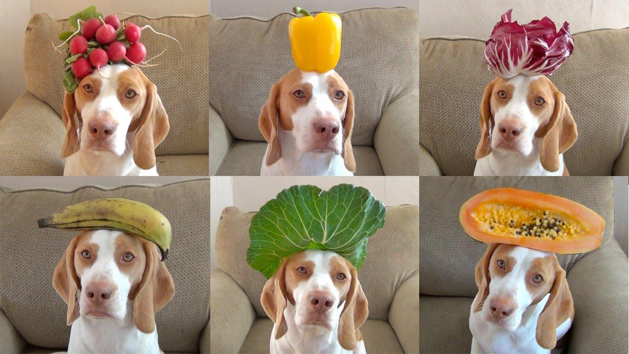 фрукты для собачки