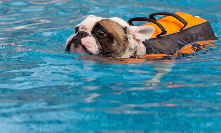 француз плохо плавает