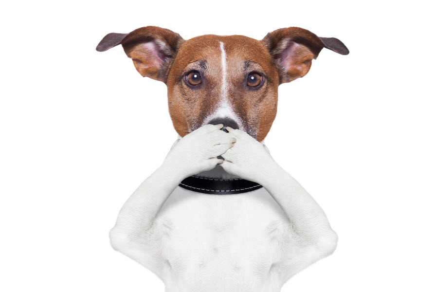 плохо пахнет собака