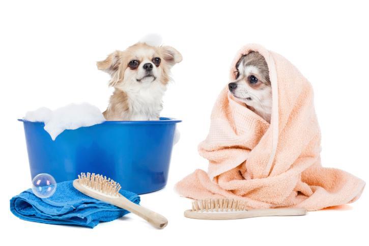 собачки после купания