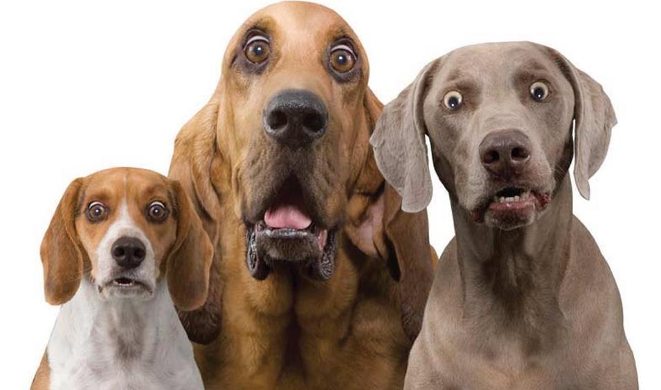 собачки и стресс