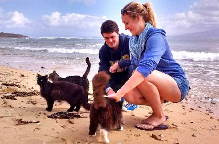 кошки на пляже