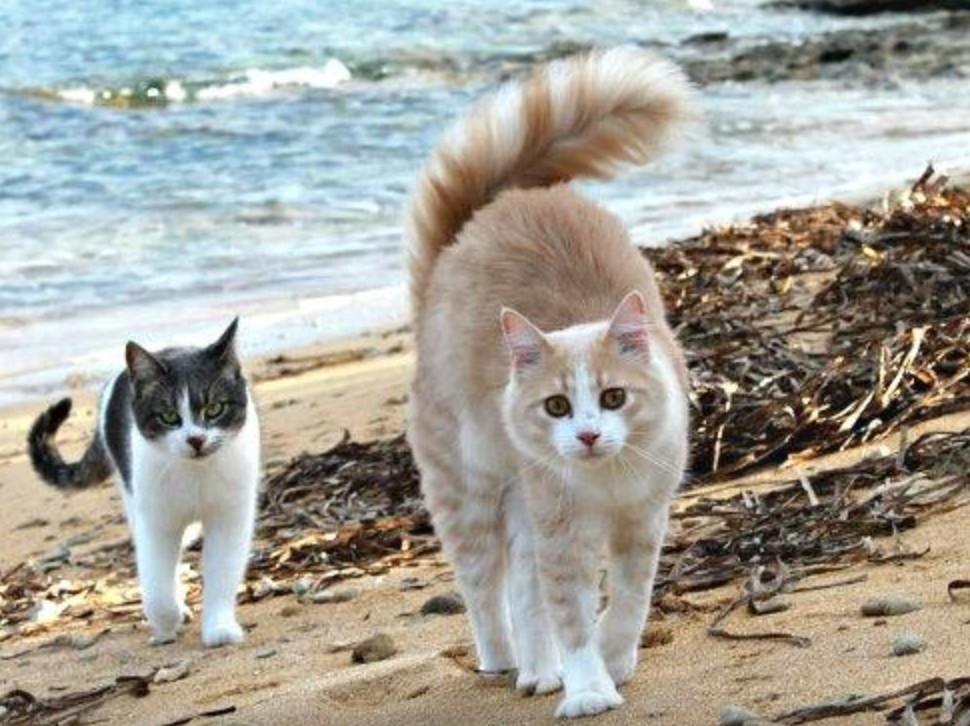 кошечки на пляже