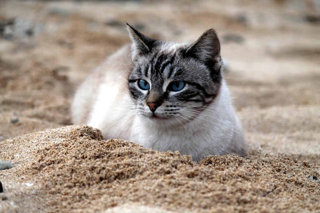 кошка на пляже