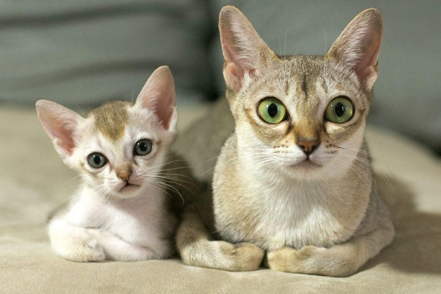 кот и кошечка малышки