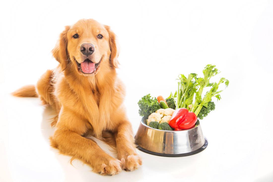Здоровое питание-здоровая собака