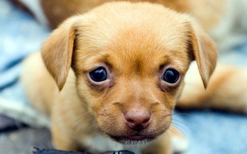 красивый щеночек