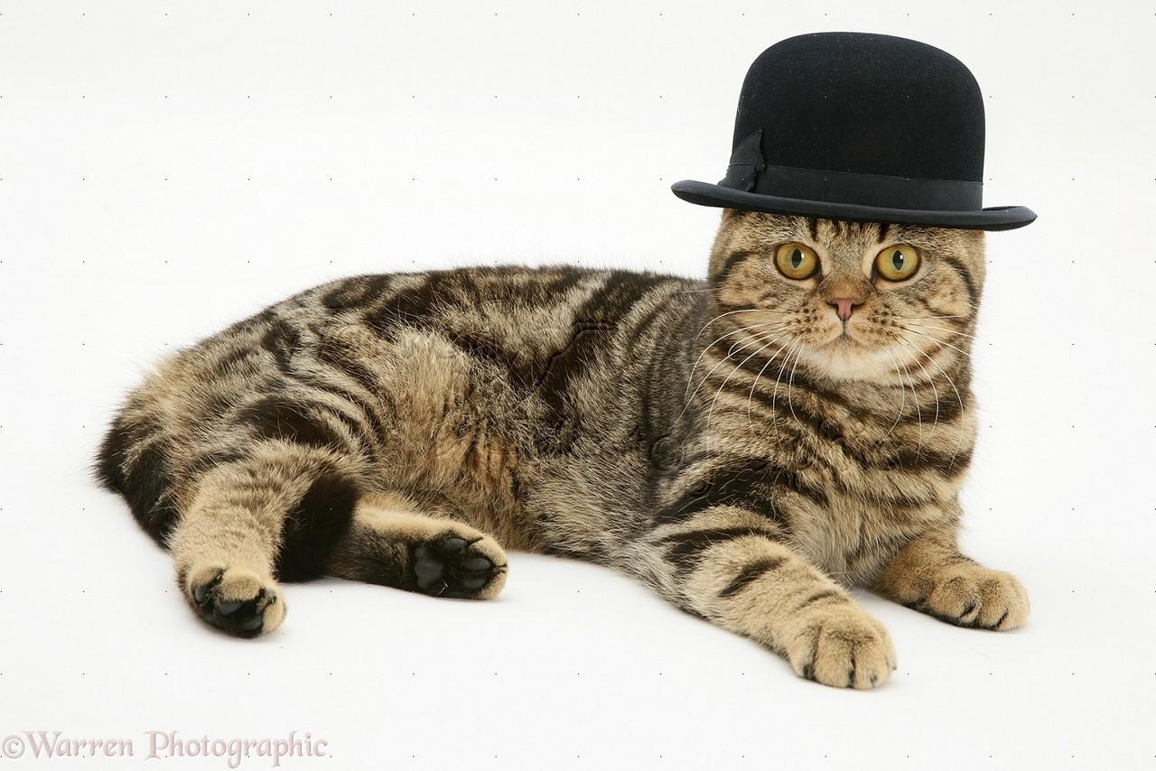 британец в шляпе