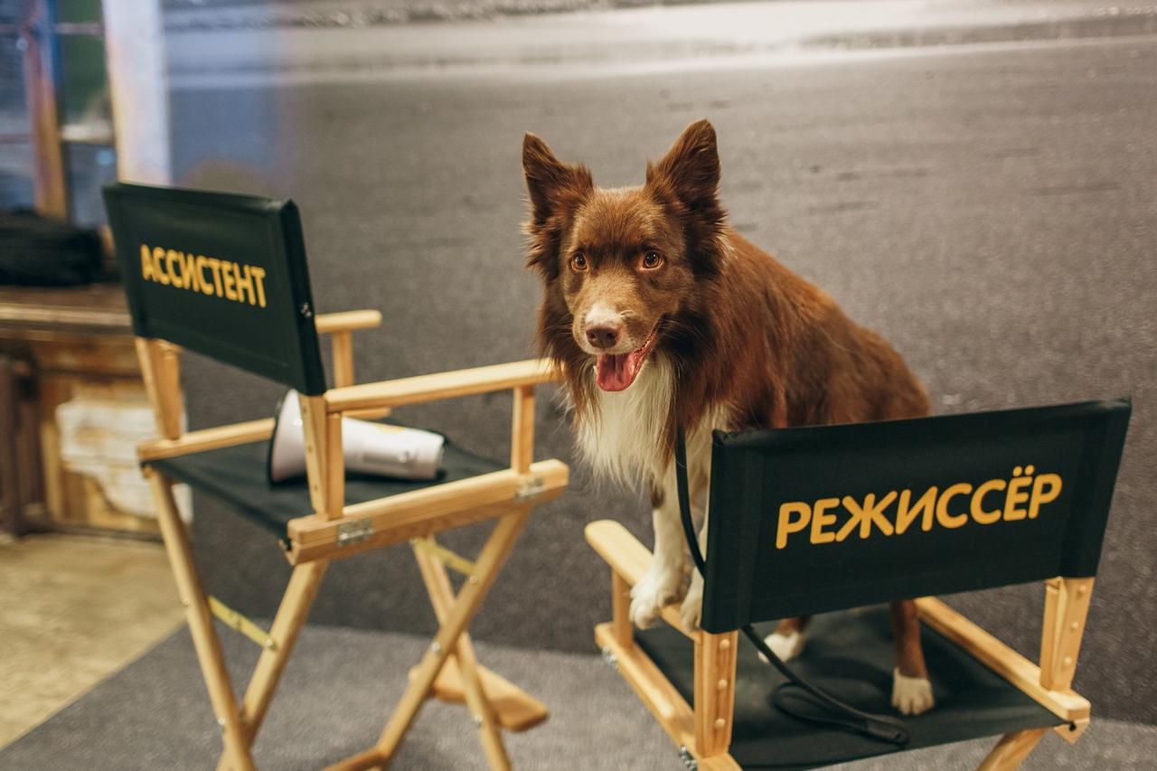 Собака и режиссер