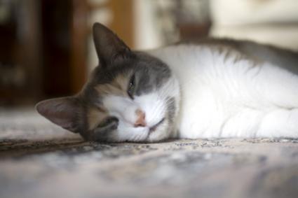 котик без настроения