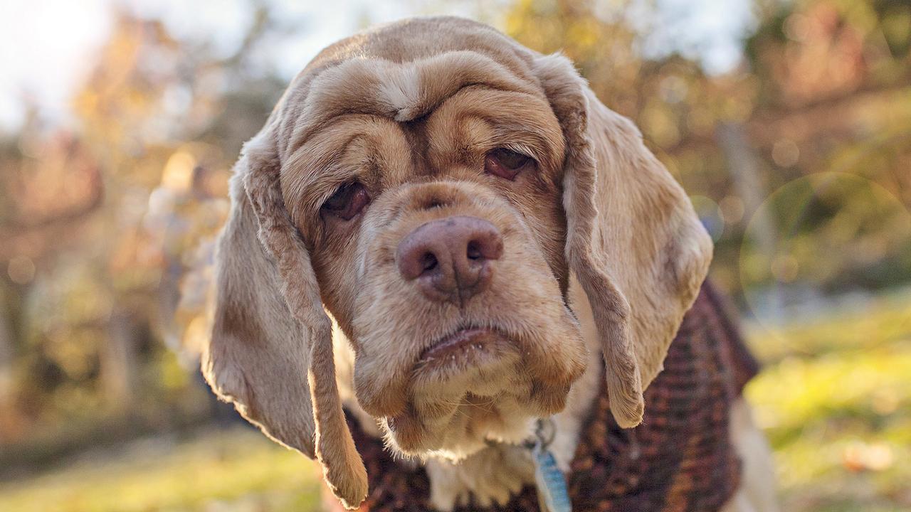 старенькая собачка