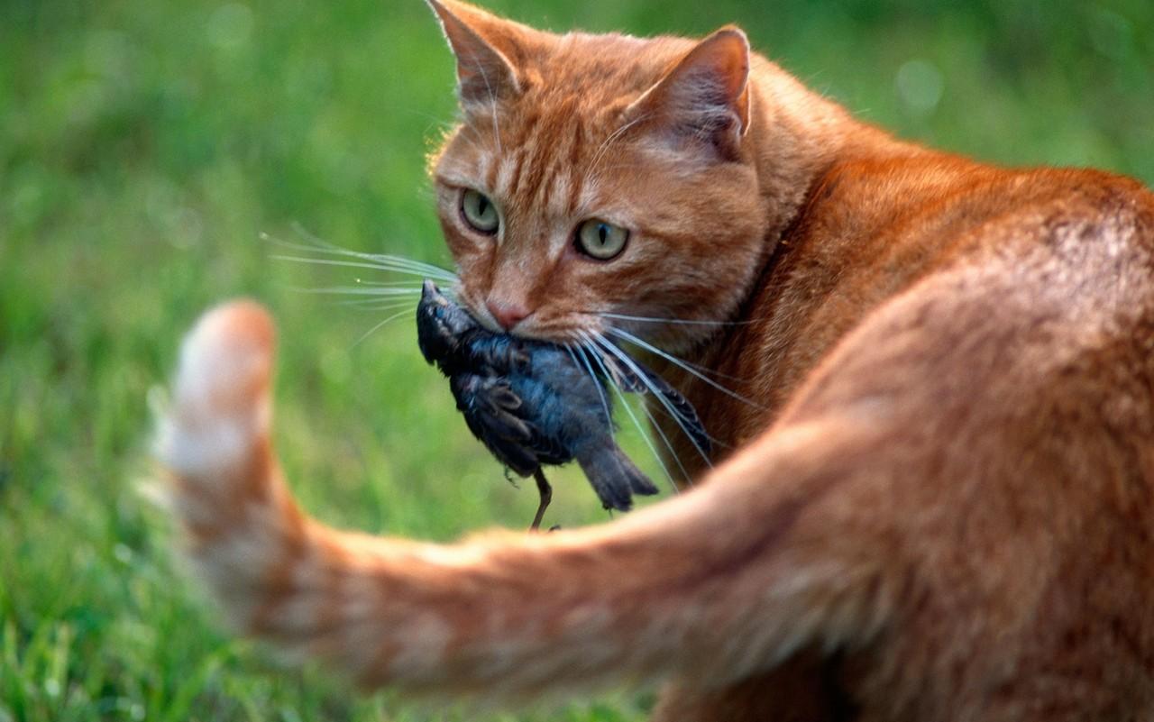 котик поймал птичку