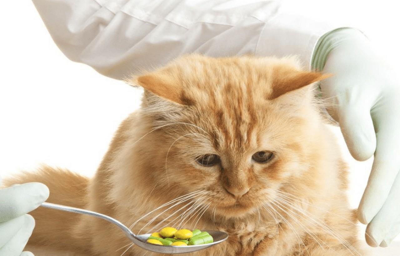 витамины кот
