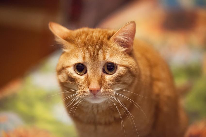 стресс кот