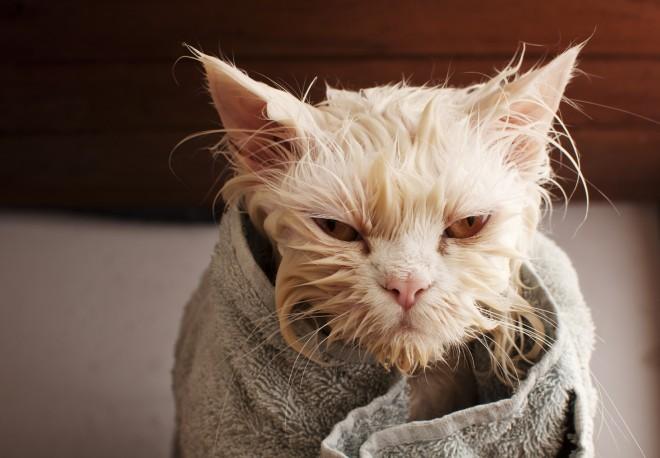 кот не любит купаться