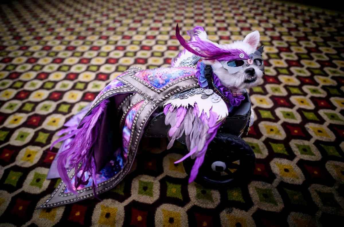 мода шоу животные