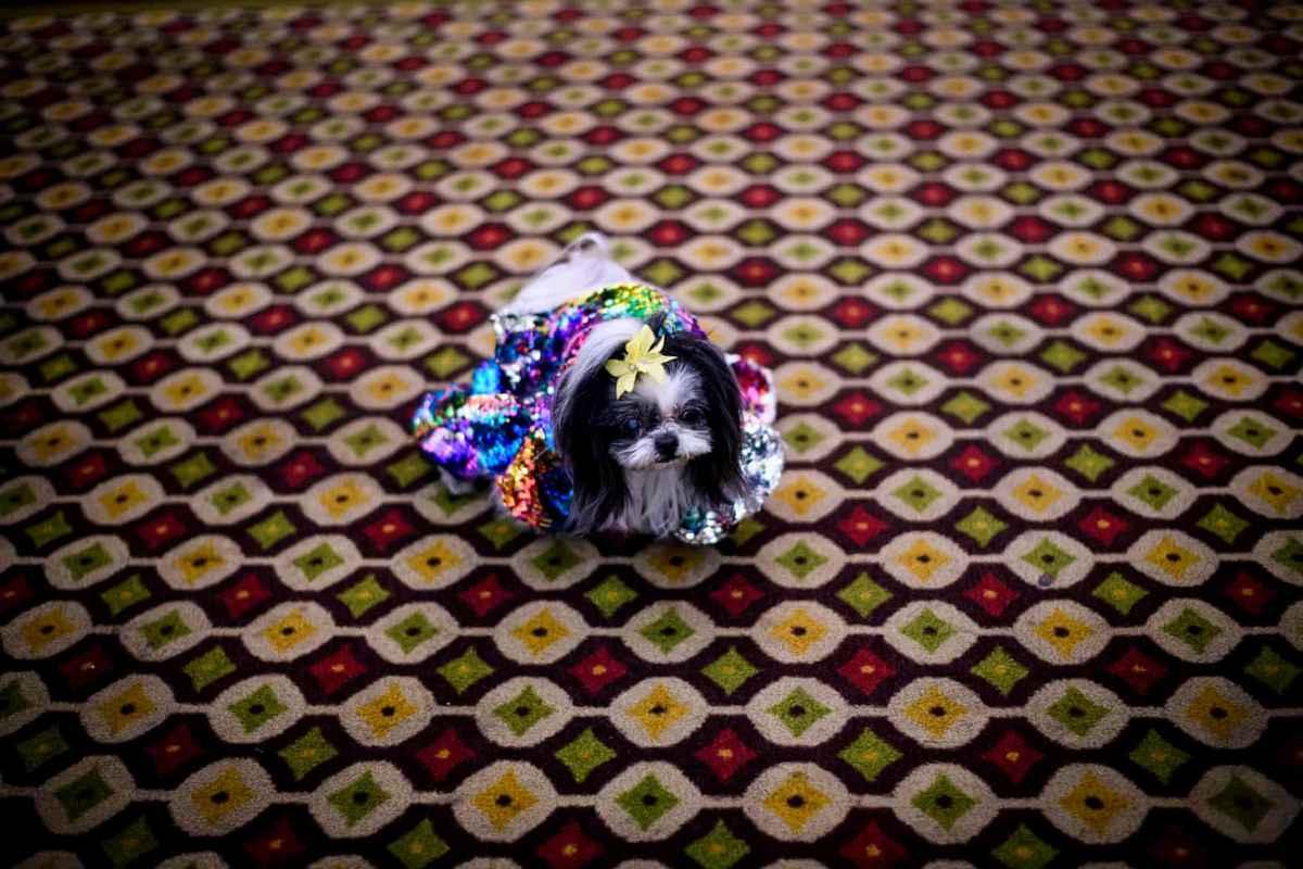 мода бал маскарад собачки