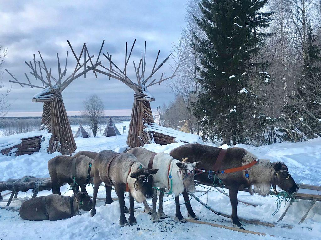 праздник оленя
