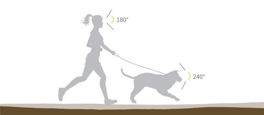 поле зрения собаки