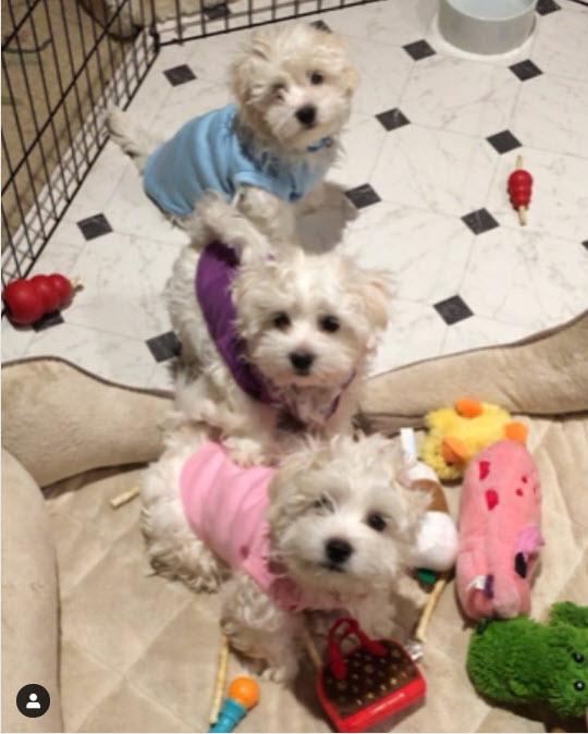 клонирование собачки Барбара Стрейзанд