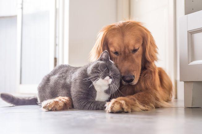 кошка и собака, любовь
