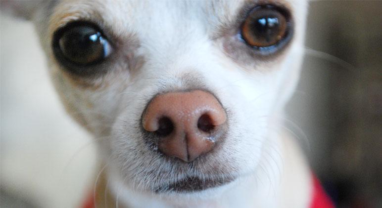 Собачка с мокрым носом