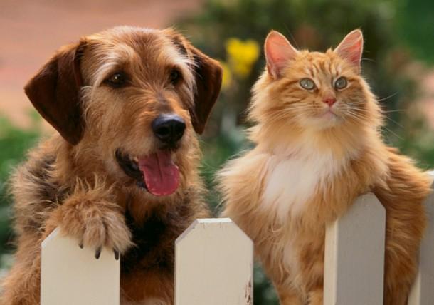 собачка и кошка