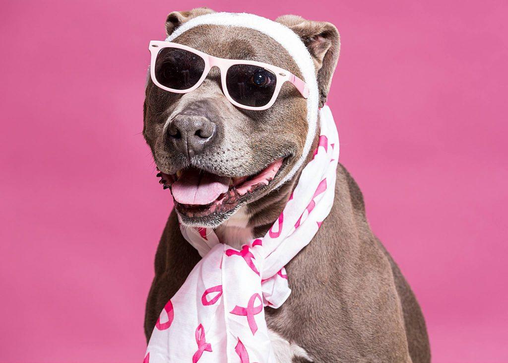 собака модница