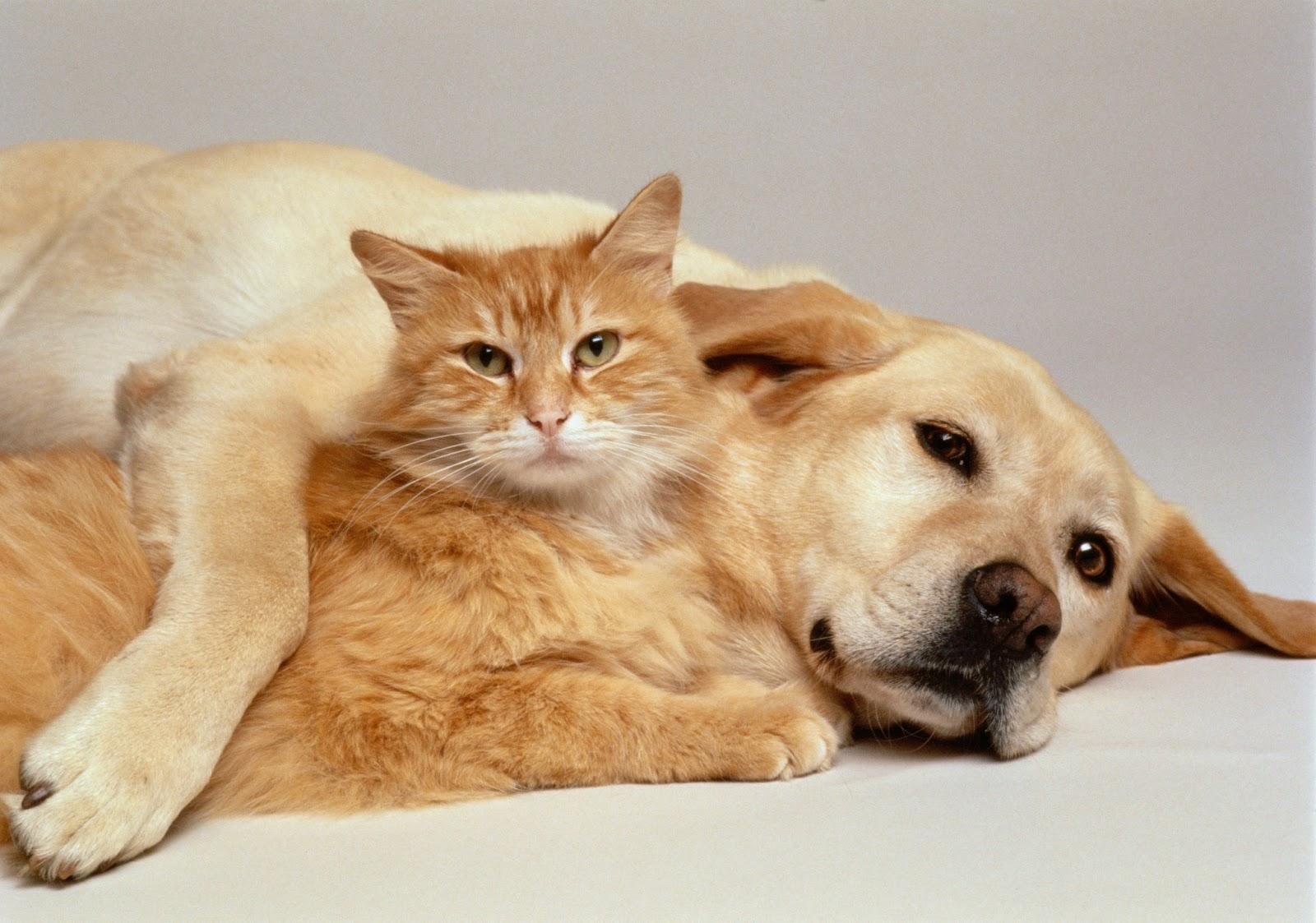 собака и кошка, дружба навек