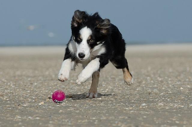 развивающие игрушки для собак