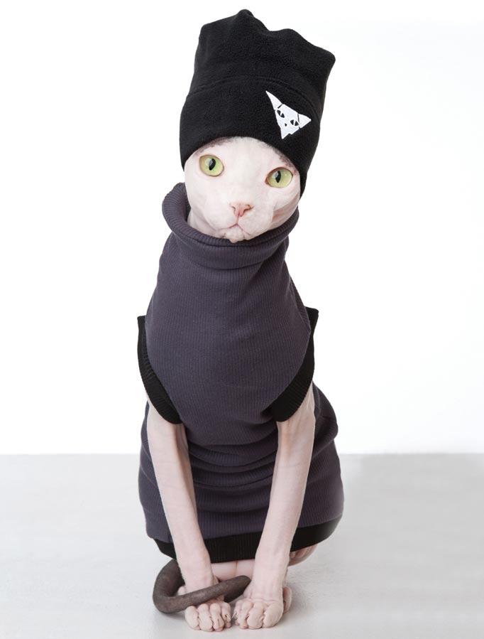 лысая кошка зимой