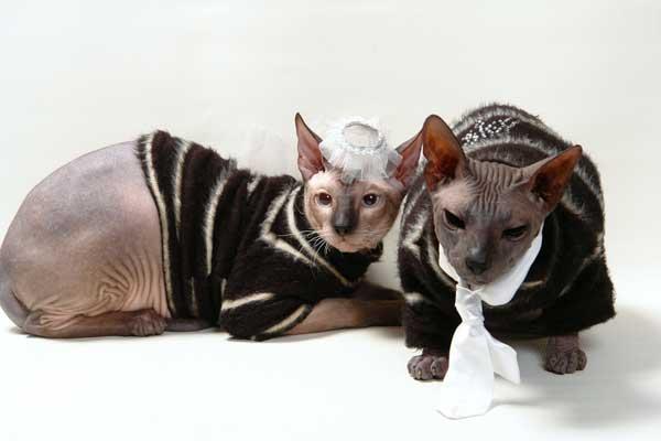платье для лысой кошки