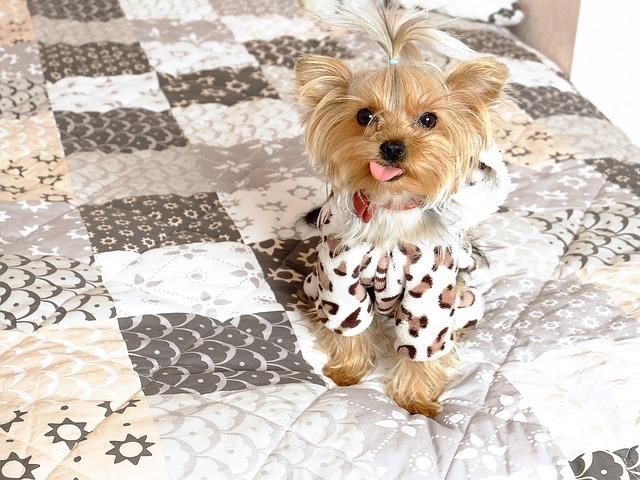 вебсериал о тайной жизни домашних животных