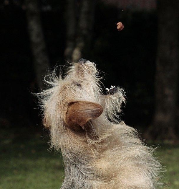 Почему у собаки урчит в животе