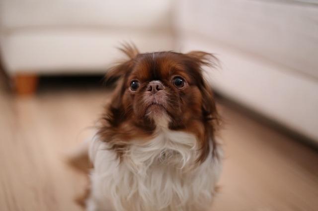 Собака боится громких звуков