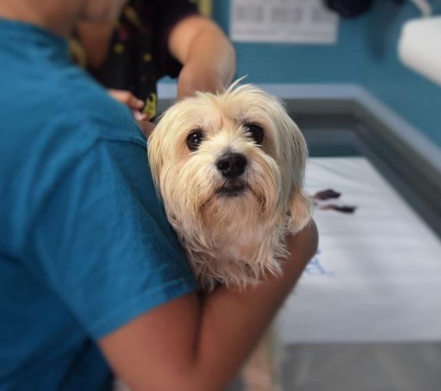 Какие прививки делают собакам