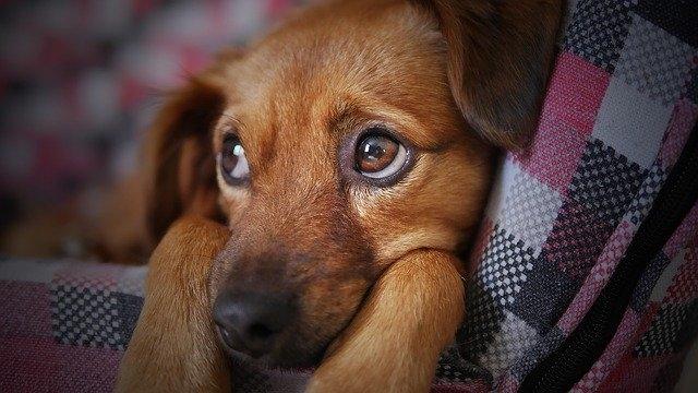 Боррелиоз симптомы и последствия у собак