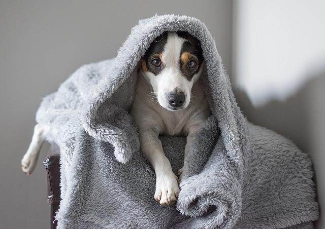 Почему собака стала вялой?