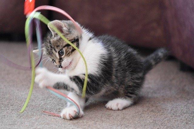 Котенок в доме: затраты на нового питомца