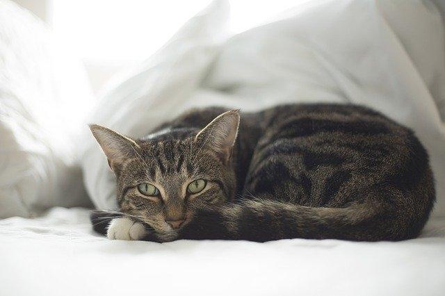 Какая температура должна быть у кошки