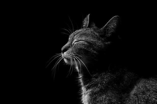 Нарушения кровообращения у кошек
