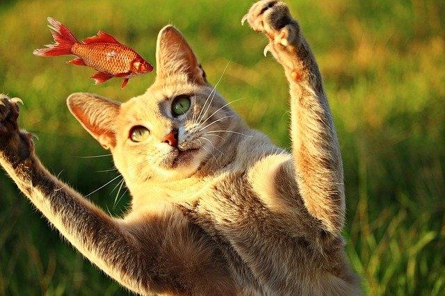 Как правильно кормить кошку? Можно ли сочетать влажный и сухой корм?